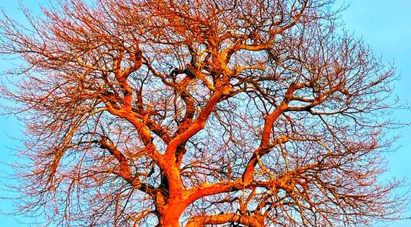 tree image that looks like a brain, to say journaling can help your brain deal with trauma